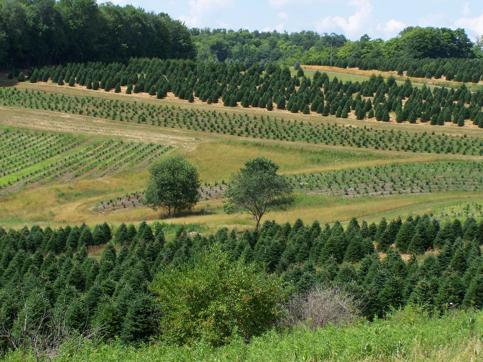 Forest View Evergreen Tree Farms - About Us